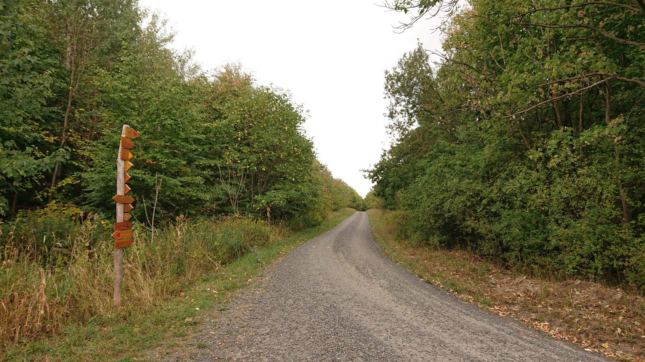 Nationalpark Hainich Saugrabenweg und Betteleichenweg wandern, dichter, ursprünglicher Buchenwald, breitere Wegabschnitte, Wegmarkierung