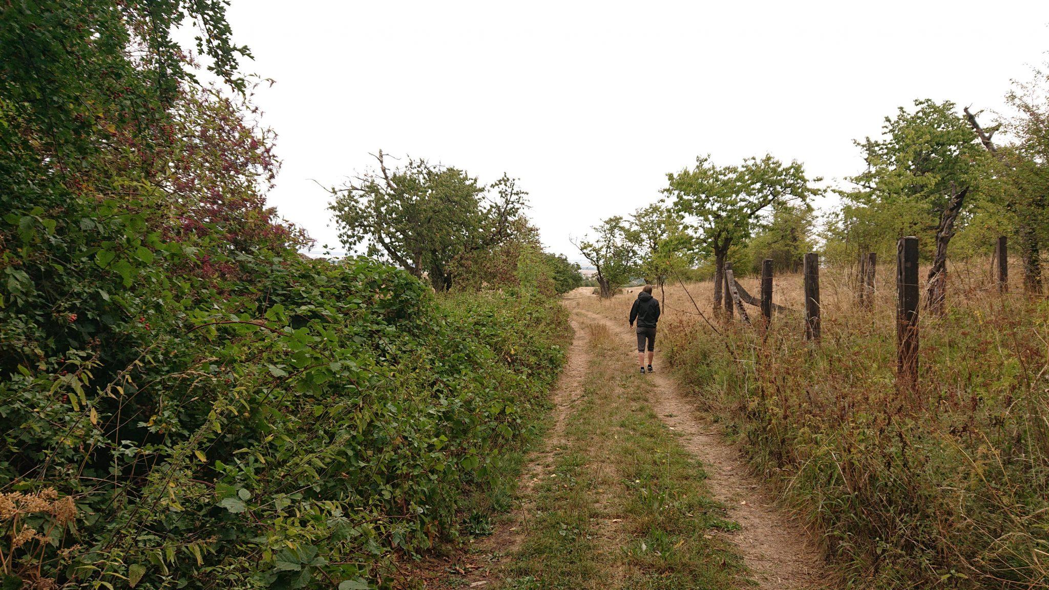 Nationalpark Hainich Saugrabenweg und Betteleichenweg wandern, letzter Abschnitt zurück zum Ausgangspunkt über Feldwege entlang Obstbaumplantagen