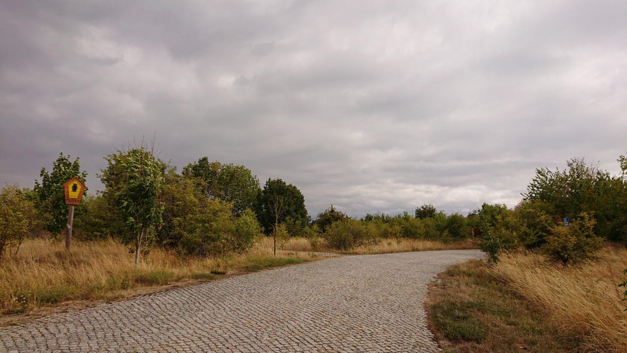 Nationalpark Hainich Saugrabenweg und Betteleichenweg wandern, letzter Wegabschnitt leider an Straße entlang, aber eigentlich kein Verkehr