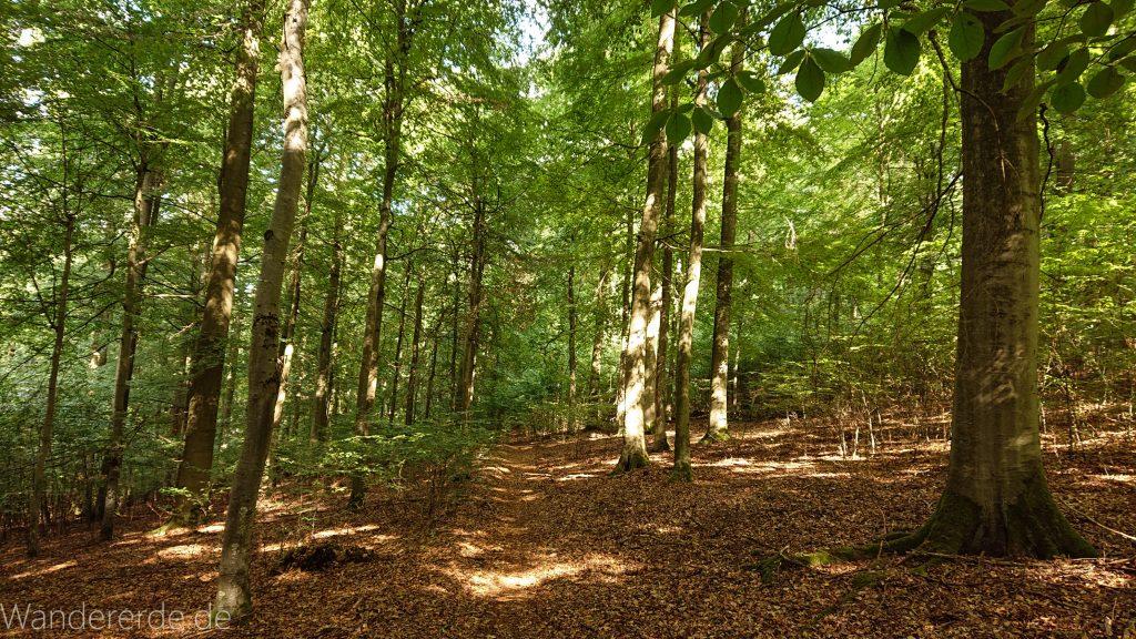 Urwaldsteig von Hemfurth nach Bringhausen zur Jausenstation, Nationalpark Kellerwald Edersee