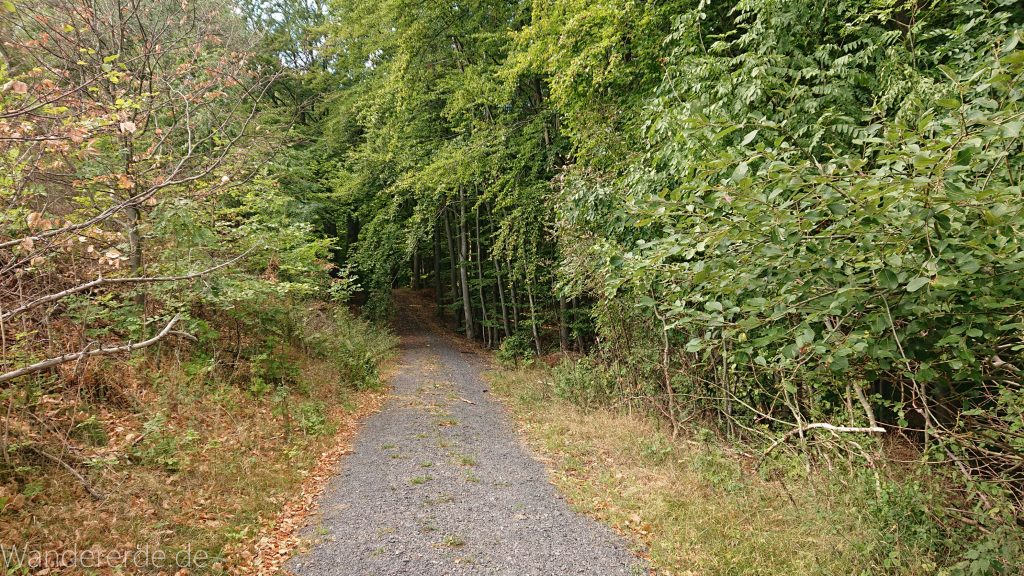 Urwaldsteig von Hemfurth nach Bringhausen zur Jausenstation, Nationalpark Kellerwald Edersee, naturbelassener Pfad im schönen Wald