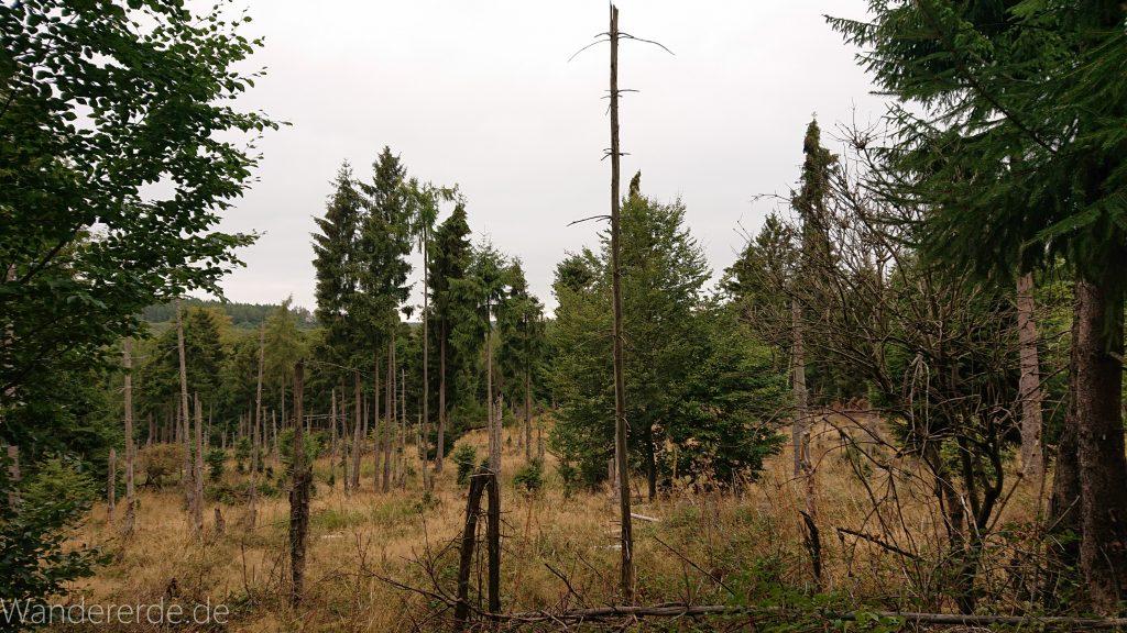 Von Frebershausen zum Quernst, zum Elisabetherplatz und zur Wolfsgrube, Wanderweg im schönen Wald im Nationalpark Kellerwald Edersee über naturbelassene Pfade, schöner Wald