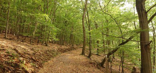 Wanderung bei Asel Süd im Nationalpark Kellerwald Edersee, schöner Wald mit natürlichem Weg