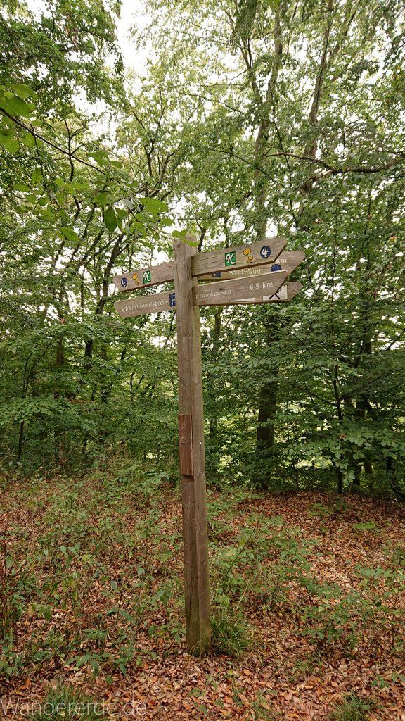 Wanderung bei Asel Süd im Nationalpark Kellerwald Edersee, Schild Wegweiser