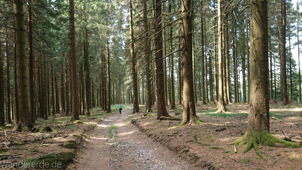 Kahler Asten-Steig, Wanderung auf den Berg Kahler Asten im Sauerland in Nordrhein-Westfalen