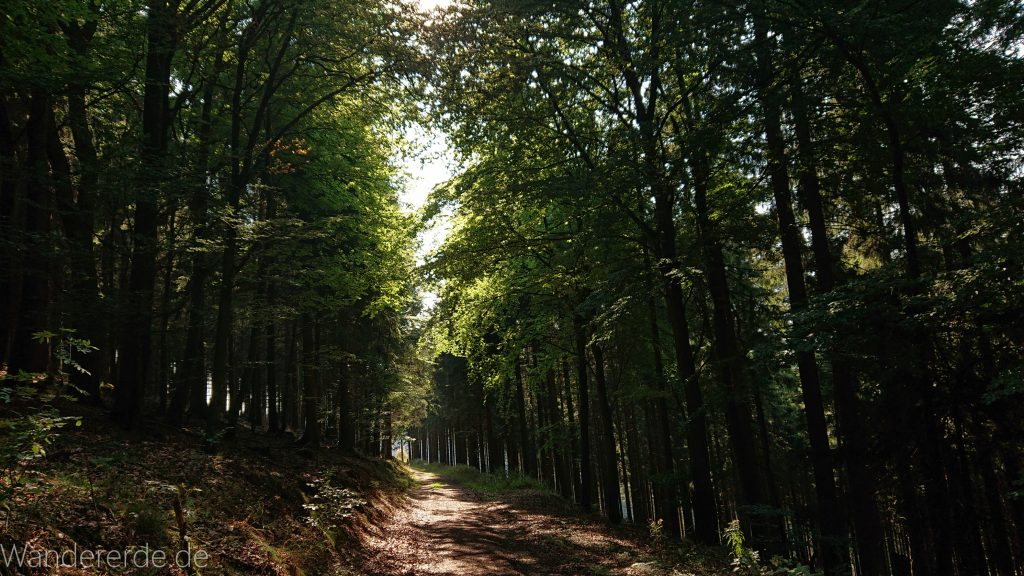 Kahler Asten-Steig, Wanderung auf den Berg Kahler Asten im Sauerland in Nordrhein-Westfalen, Weg durch schönen Wald