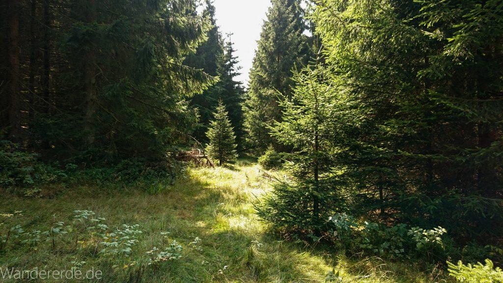 Dreibrodesteine Wanderung im Harz bei Sankt Andreasberg, schöner Wald