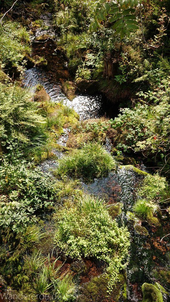Dreibrodesteine Wanderung im Harz bei Sankt Andreasberg, Weg durch das schöne Siebertal, fließender Fluß Sieber
