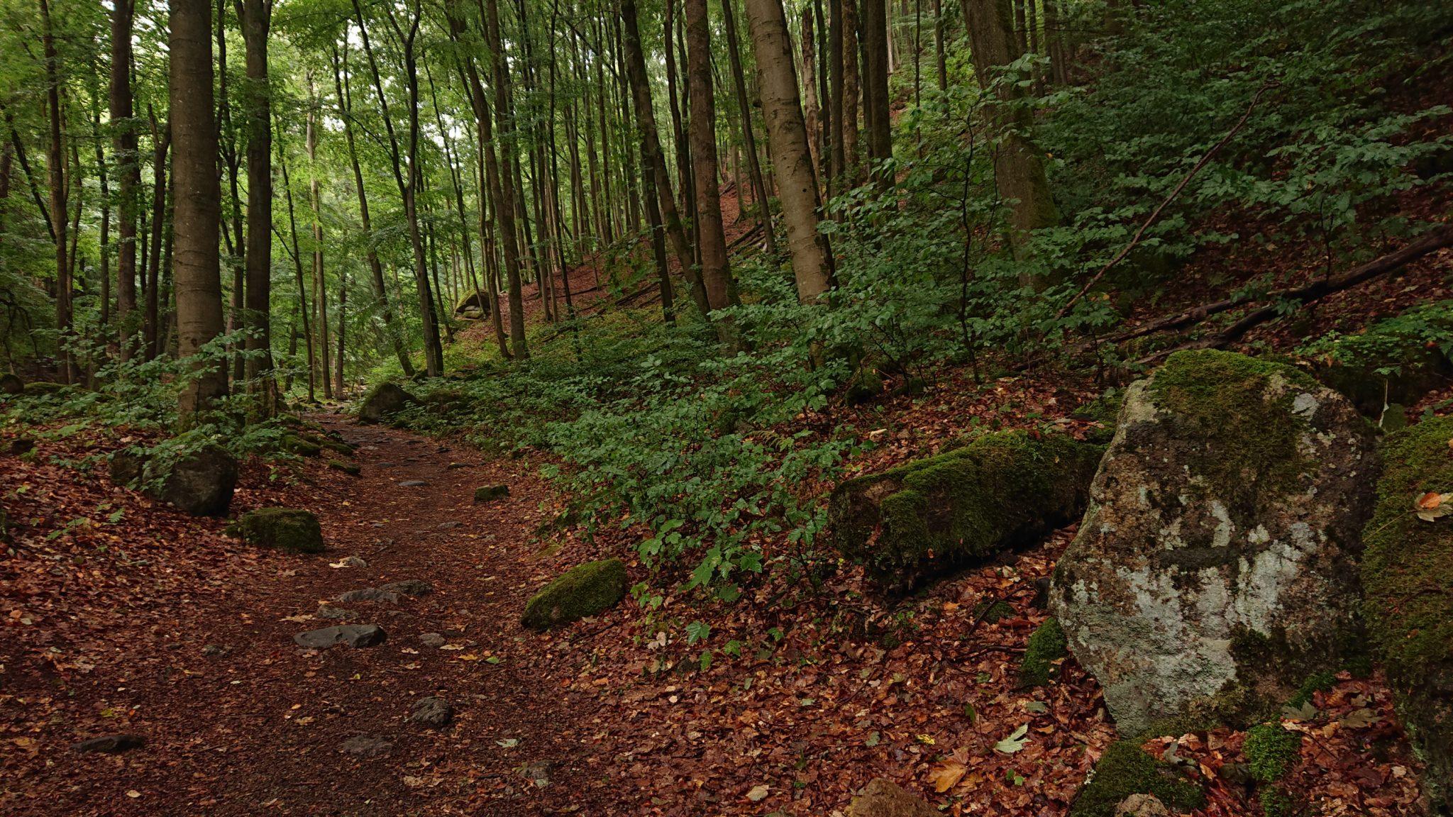 Wanderung Brocken über Heinrich-Heine-Weg, Start in Ilsenburg, Nationalpark Harz, schöner Wanderweg im Wald, atmosphärisch, herrliche frische Luft, viele Laubbäume