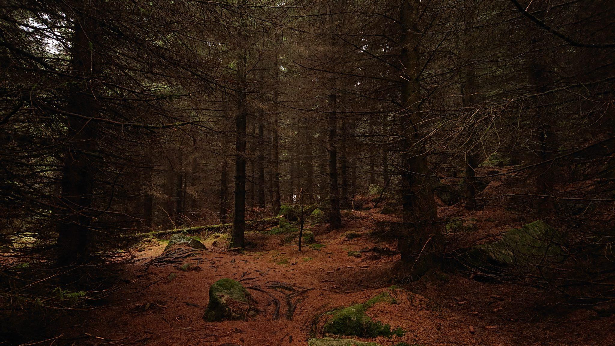 Wanderung Brocken über Heinrich-Heine-Weg Start in Ilsenburg, Nationalpark Harz