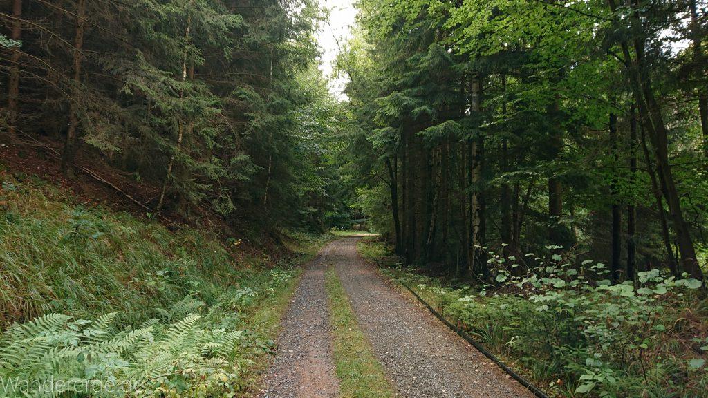 Von Bad Harzburg zur Rabenklippe und durchs Eckertal, Wanderung im Harz in Niedersachsen
