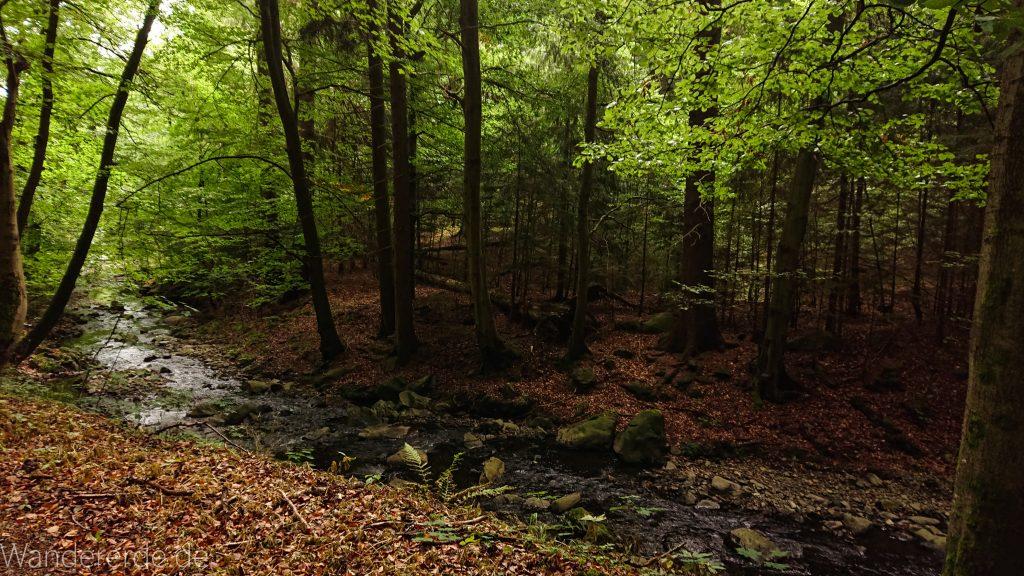 Von Bad Harzburg zur Rabenklippe und durchs Eckertal, Wanderung im Harz in Niedersachsen, im schönen idyllischen Eckertal