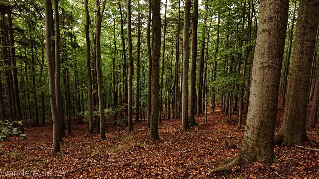 Von Bad Harzburg zur Rabenklippe und durchs Eckertal, Wanderung im Harz in Niedersachsen, schöner Wald