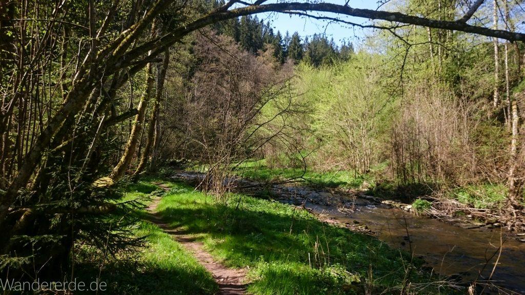 Genießerpfad, der Teinacher, naturbelassener Pfad über Wiese am Fluß entlang, Wald, Bäume