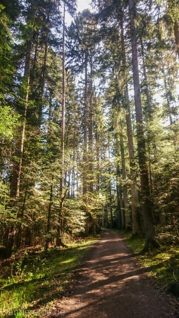 Wasser- Wald- und Wiesenpfad Calw - Genießerpfad, schöner, ebener Waldweg