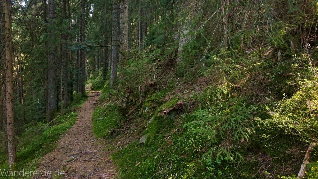 Seensteig Etappe 5, Wald beim Seensteig, natürlicher Weg durch dichten Wald, über Stock und Stein, schmaler Pfad