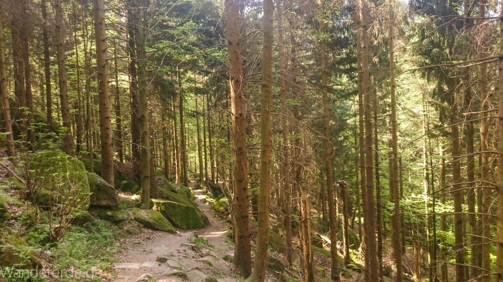 Wanderweg zu Gertelbach Wasserfälle, umringt von schönem Wald, schmaler, naturbelassener Pfad