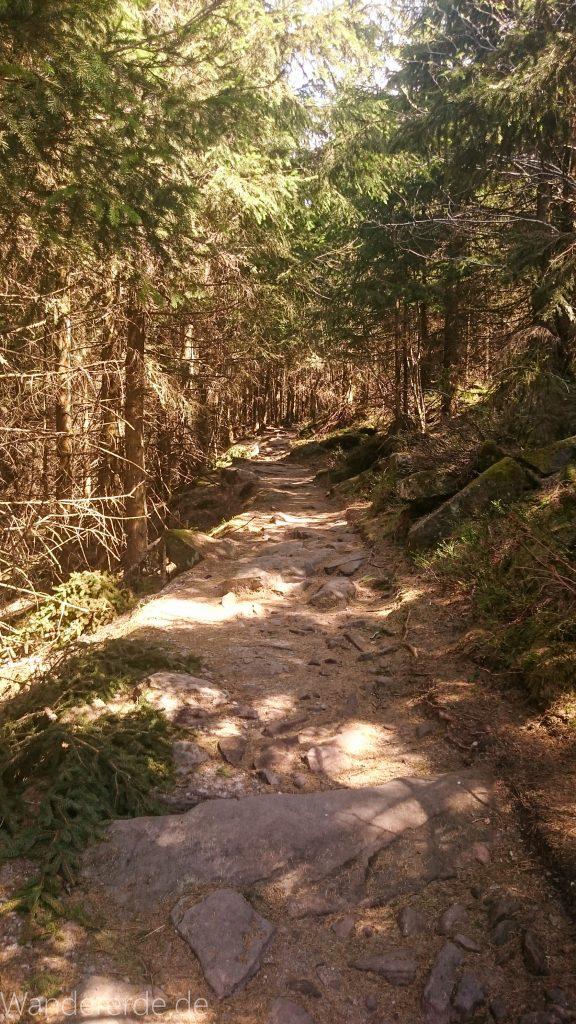 Mummelsee Hornisgrinde - Genießerpfad, Pfad durch Wald auf Hornisgrinde