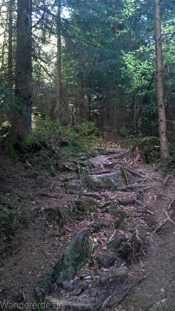 Kniebiser Heimatpfad - Genießerpfad im Schwarzwald