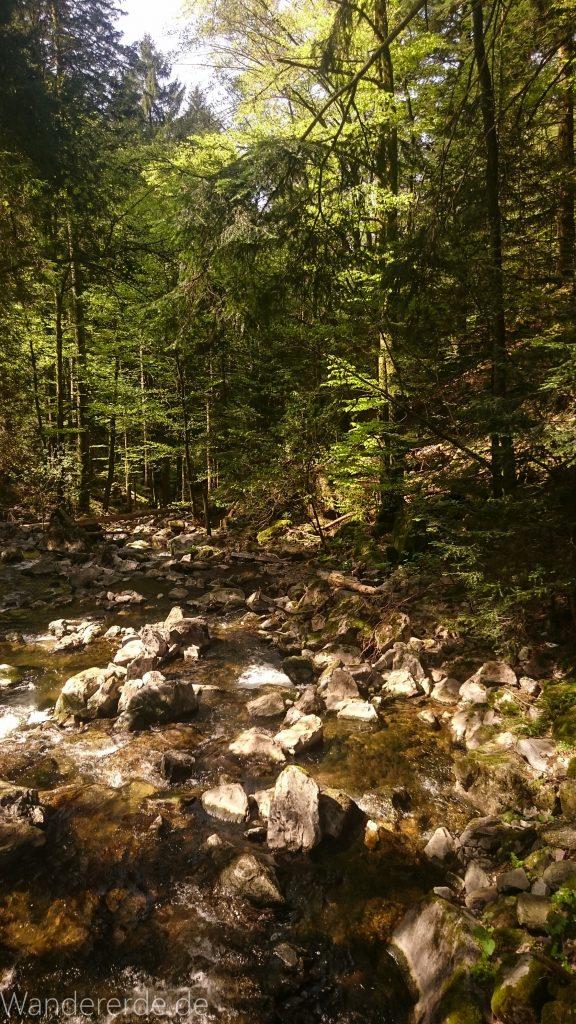 Wanderweg Wildbachtour im Schwarzwald, Fluß, viele Steine, Wald