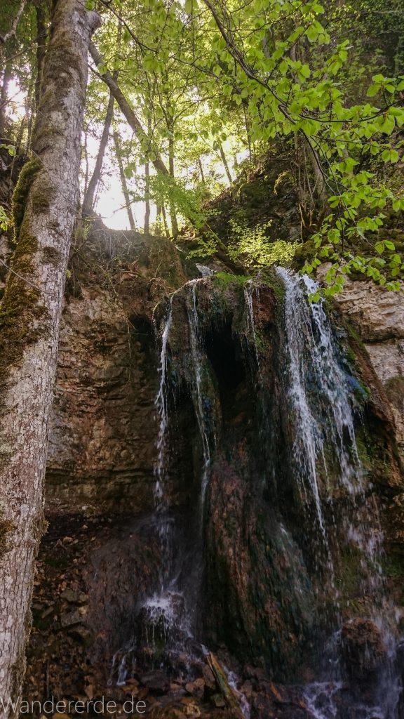 Wutachschlucht Wanderung Wutachmühle zur Schattenmühle, schöner Wald, naturbelassener Waldweg, schmaler naturbelassener Pfad, viele Bäume, Wasserfall an Felswand, kühlender Schatten