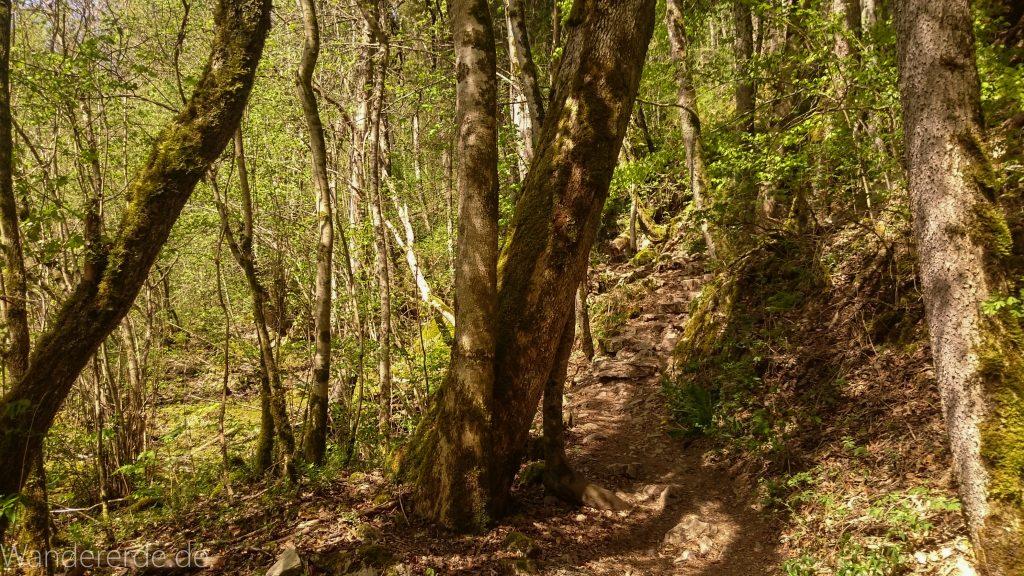 Wutachschlucht Wanderung Wutachmühle zur Schattenmühle, schöner Wald, naturbelassener Waldweg, schmaler naturbelassener Pfad, viele Bäume, kühlender Schatten