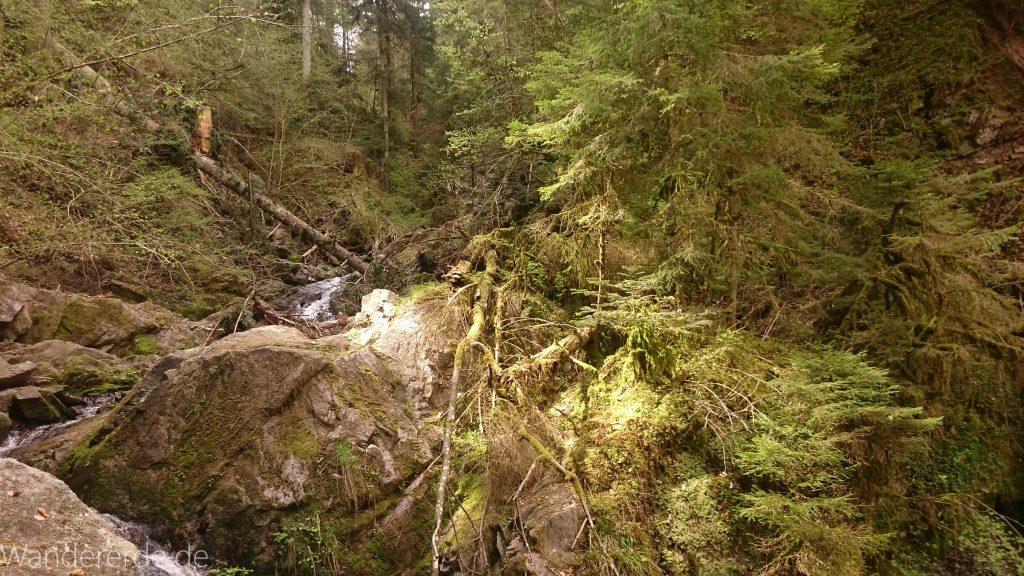 Lotenbachklamm bei der Schattenmühle, in der Klamm umgestürzter Baum, Wasser, Wasserfall, riesige Steine