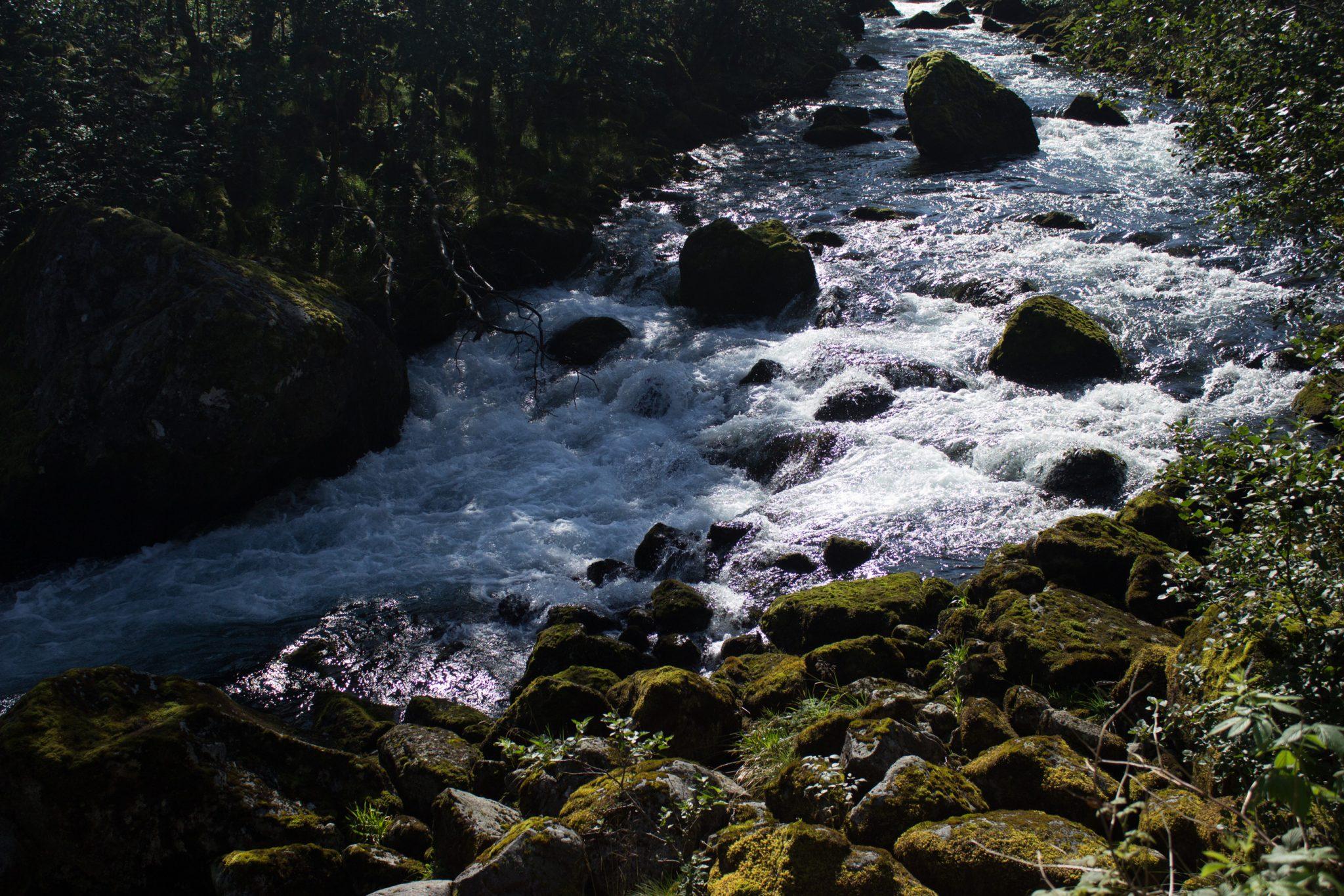 Wanderung vom Ort Sundal bis zum Gletscher Bondhusbreen im Folgefonna Nationalpark, kristallklares Wasser im Fluß, mit Moos bewachsene Steine, Farne