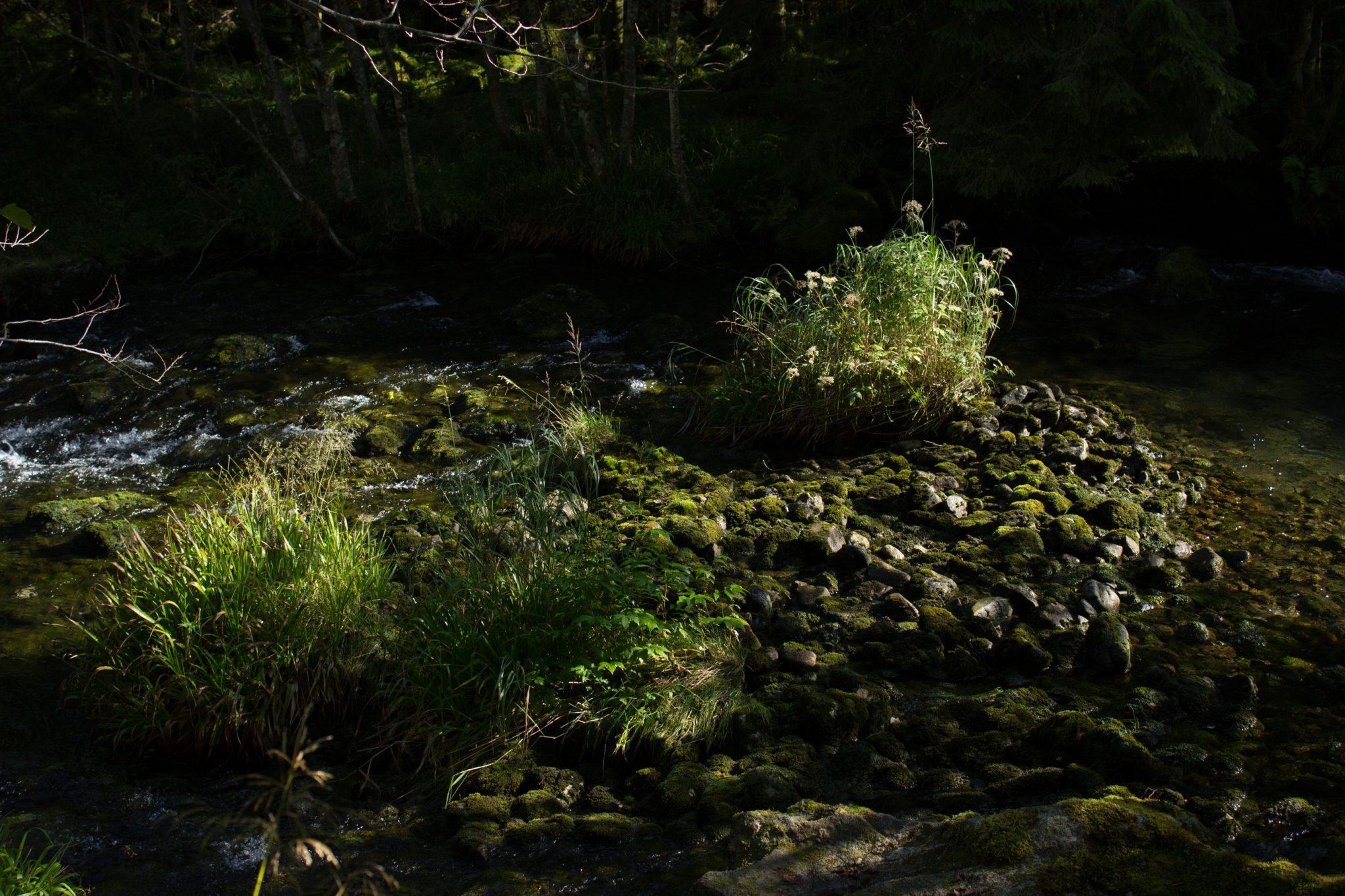 Wanderung vom Ort Sundal bis zum Gletscher Bondhusbreen im Folgefonna Nationalpark, kristallklares Wasser im Fluß, mit Moos bewachsene Steine, Farne, saftig grünes Gras