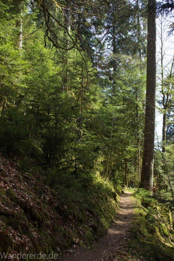 Genießerpfad, der Teinacher, naturbelassener Pfad, Wald