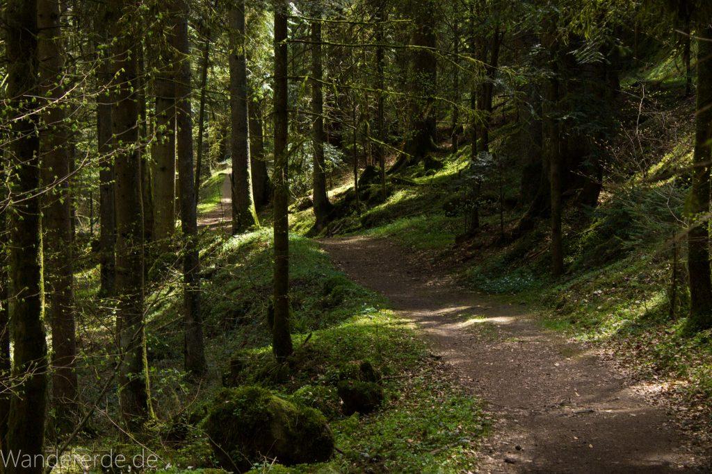 Genießerpfad, der Teinacher, naturbelassener Pfad, Wald, saftig grünes Moos, schattenspendende Bäume