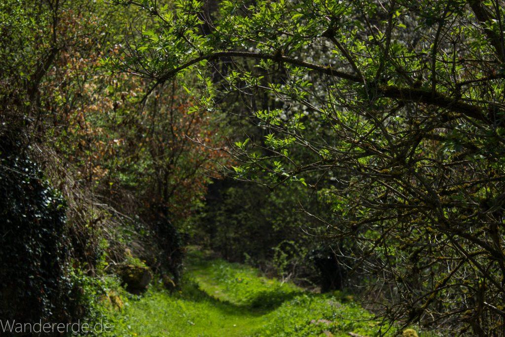 Genießerpfad, der Teinacher, naturbelassener Pfad über Wiese, Wald, Bäume