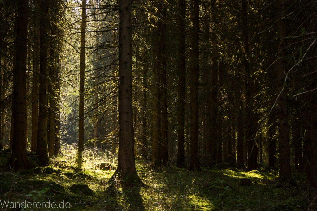 Wasser- Wald- und Wiesenpfad Calw - Genießerpfad, hohe Bäume
