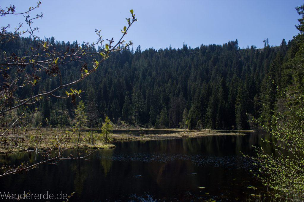 Seensteig Etappe 5, Wald beim Seensteig, natürlicher Weg durch dichten Wald, über Stock und Stein, Aussicht auf See beim Seensteig im Schwarzwald, andere Seeseite dichter Nadelwald