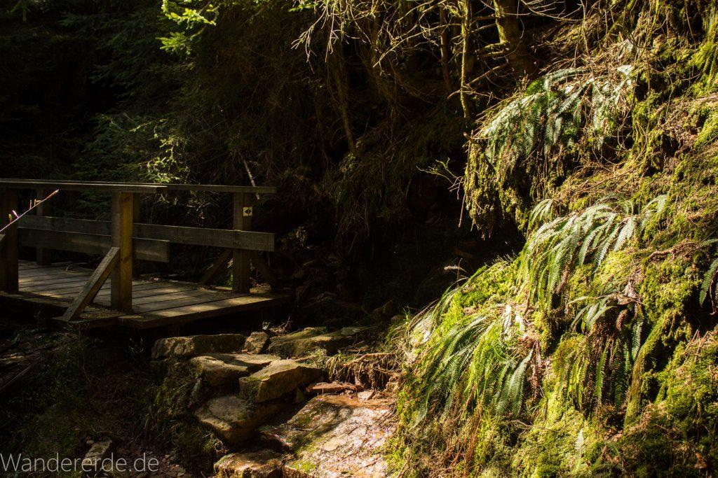 Seensteig Etappe 5, Wald beim Seensteig, natürlicher Weg durch dichten Wald, über Stock und Stein, Brücke über kleinen Wasserfall