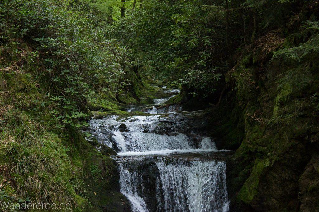 Panoramaweg Baden-Baden – Abschnitt Geroldsauer Tal, schönes,idyllisches Tal mit tollem Wasserfall, umringt von Wald und unzähligen Rhododendron, Natur Pfad auf beiden Seiten entlang des Tals