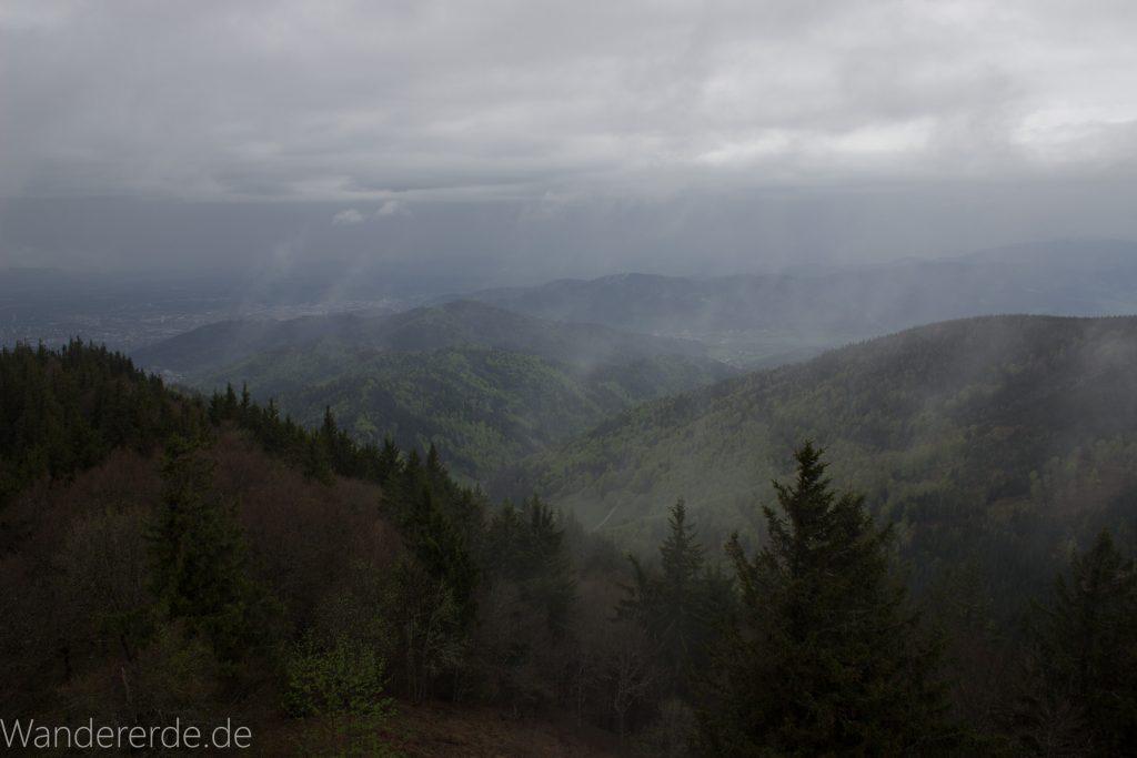 Bäume im Schwarzwald, Wolken, regnerisches Wetter, schöne Aussicht bei Freiburg