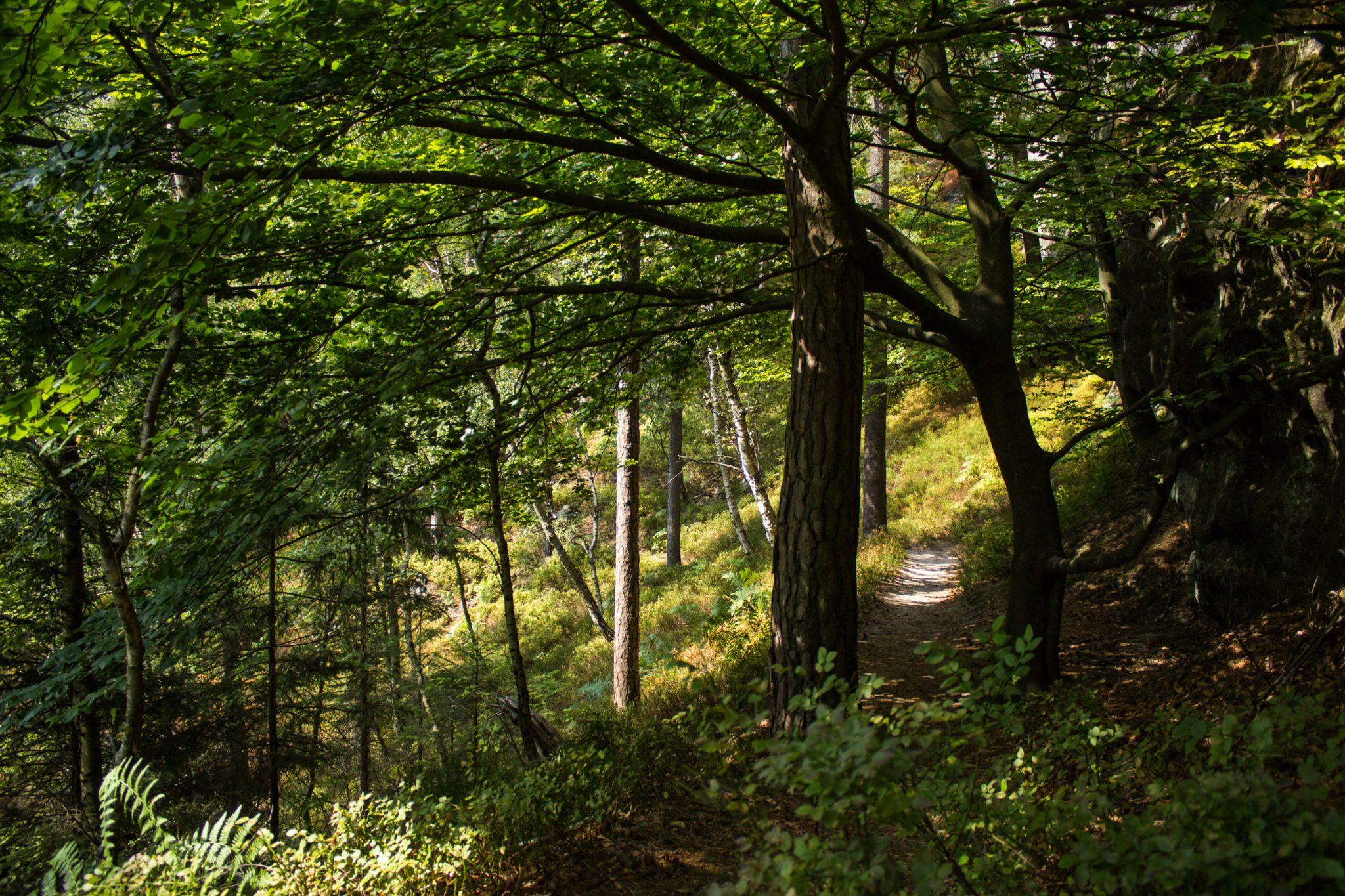 Zeughaus Roß- und Goldsteig Richterschlüchte im Kirnitzschtal wandern, Wanderweg im Wanderparadies Sächsische Schweiz mit vielen tollen Aussichten, riesiger Felsennationalpark, schmaler natürlicher Pfad durch schönen Wald