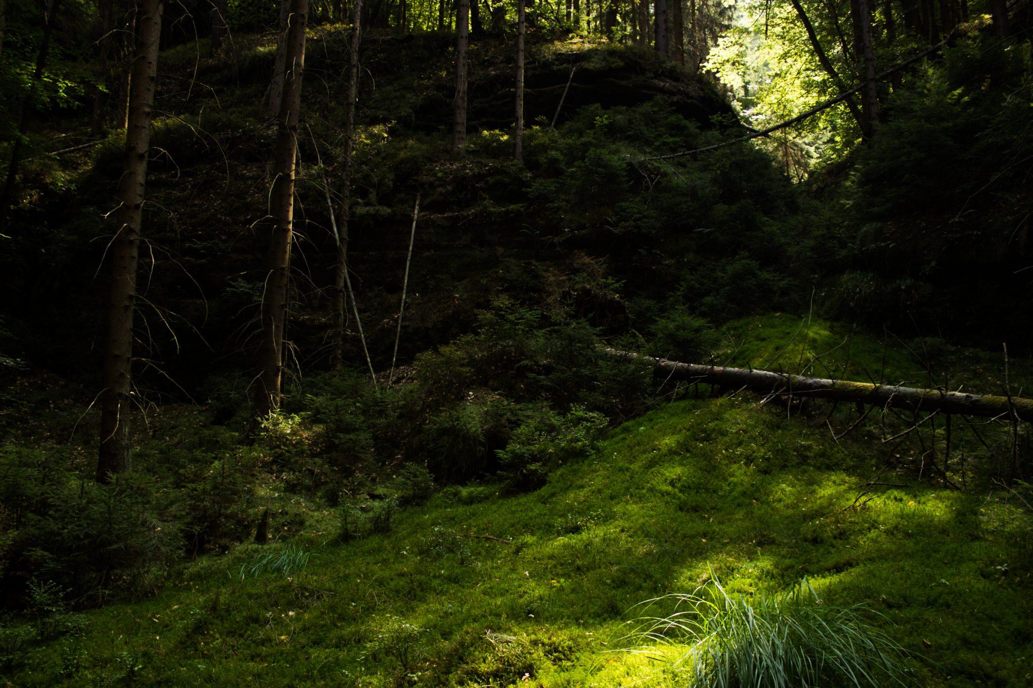 Zeughaus Roß- und Goldsteig Richterschlüchte im Kirnitzschtal wandern, Wanderweg im Wanderparadies Sächsische Schweiz mit vielen tollen Aussichten, riesiger Felsennationalpark, sehr viel saftig grünes Moos