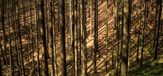Zeughaus Hickelhöhle und Großer Reitsteig - im Kirnitzschtal wandern, Wanderweg im Wanderparadies Sächsische Schweiz mit vielen tollen Aussichten, riesiger Felsennationalpark, unendliche viele hohe, sehr dünne Bäume