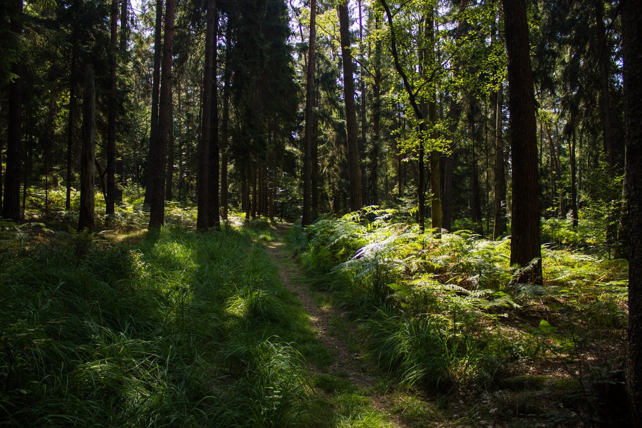 Hohe Liebe Schrammsteine Carolafelsen, Wanderweg im Wanderparadies Sächsische Schweiz mit vielen tollen Aussichten, riesiger Felsennationalpark, schmaler Pfad im schönen saftig grünen Wald