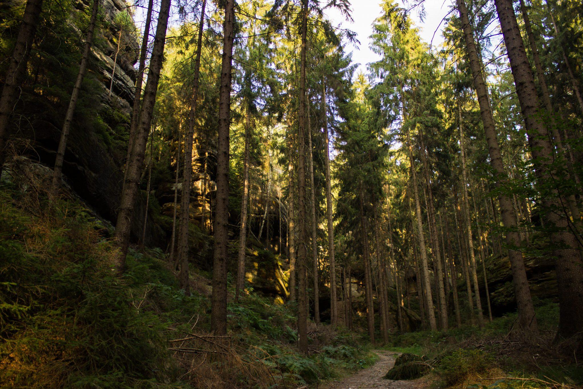 Hohe Liebe Schrammsteine Carolafelsen, Wanderweg im Wanderparadies Sächsische Schweiz mit vielen tollen Aussichten, riesiger Felsennationalpark, schöne Lichtstimmung im Wald