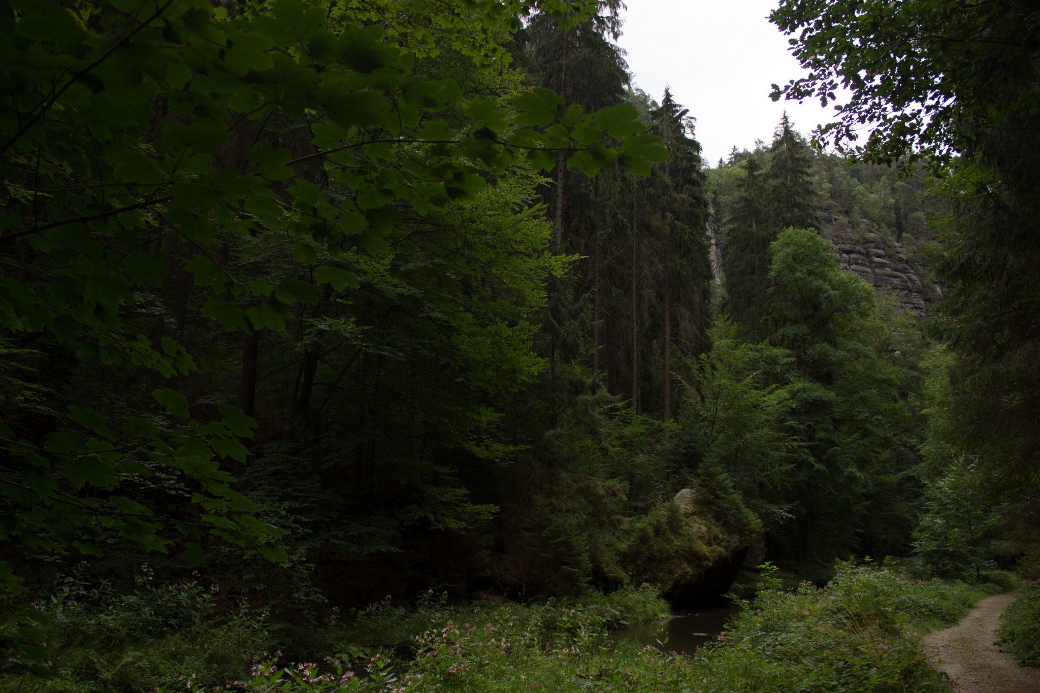 Wanderung durch Polenztal zur Bastei und zu Schwedenlöcher, Wanderweg im Polenztal, saftig grüner Wald, schmaler Pfad neben Fluß Polenz, hohe Felsen