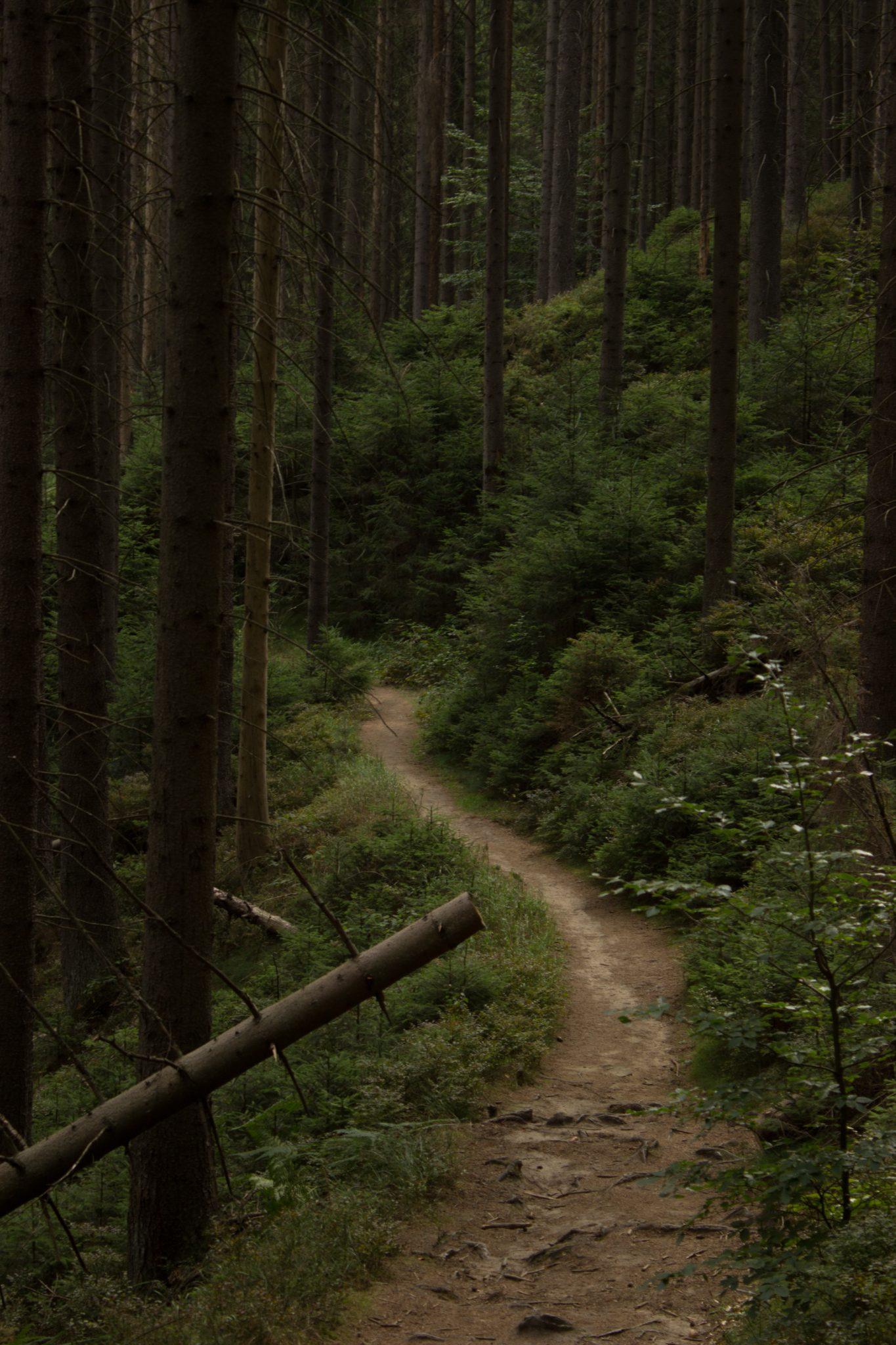 Kirnitzschklamm Hermanseck und Königsplatz im Kirnitzschtal wandern, Wanderweg im Wanderparadies Sächsische Schweiz mit vielen tollen Aussichten, riesiger Felsennationalpark, schmaler Pfad im Wald