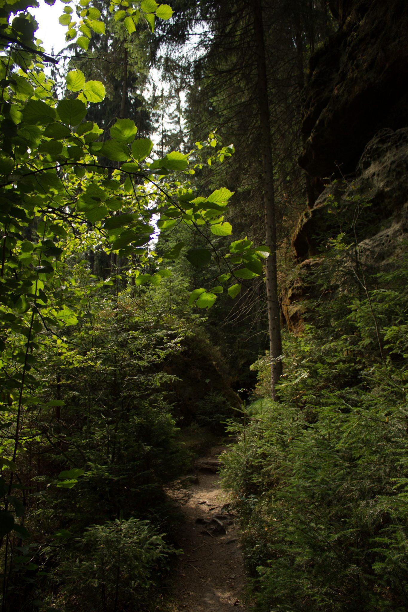 Kirnitzschklamm Hermanseck und Königsplatz im Kirnitzschtal wandern, Wanderweg im Wanderparadies Sächsische Schweiz mit vielen tollen Aussichten, riesiger Felsennationalpark, schmaler und schöner Pfad im Wald