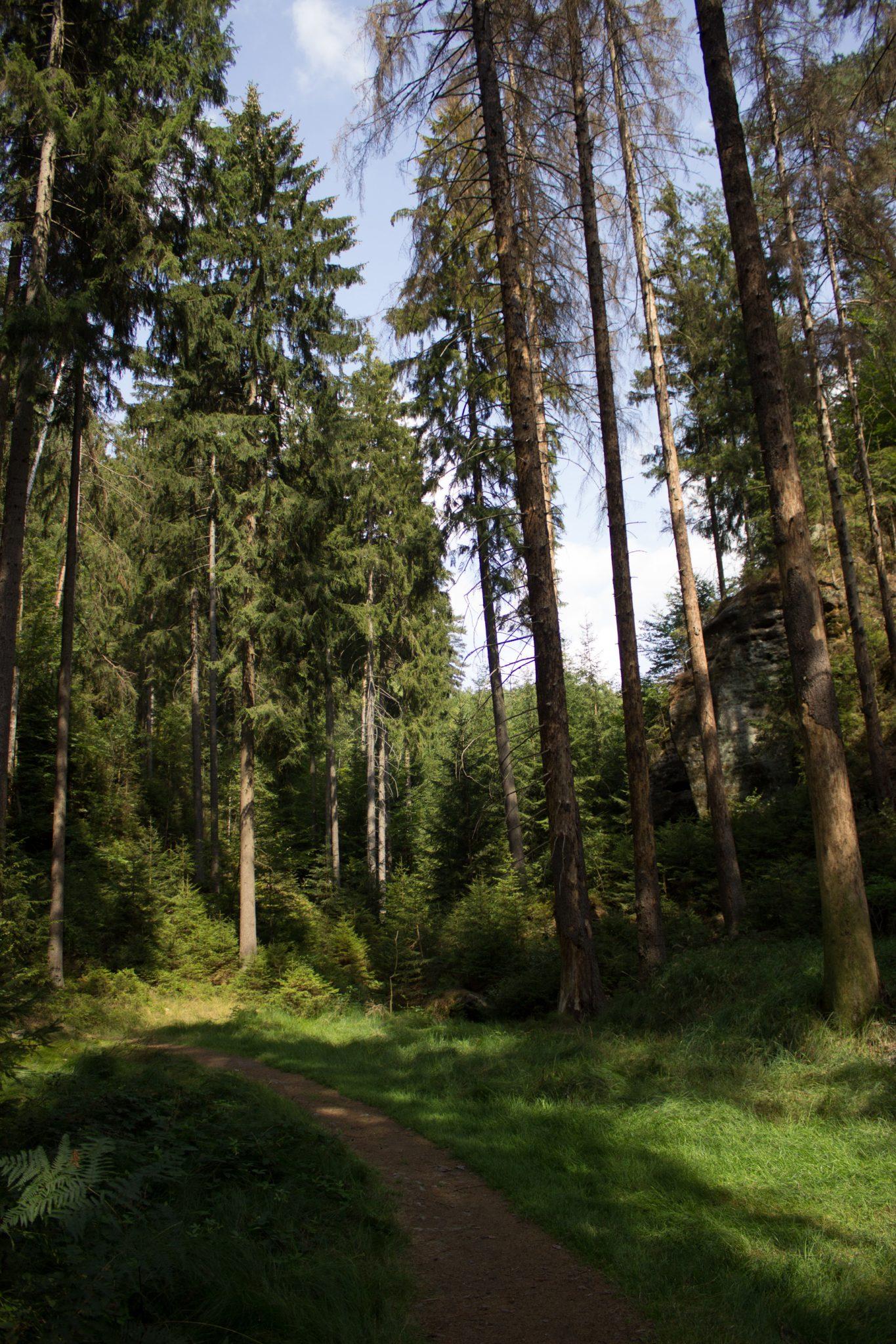 Kirnitzschklamm Hermanseck und Königsplatz im Kirnitzschtal wandern, Wanderweg im Wanderparadies Sächsische Schweiz mit vielen tollen Aussichten, riesiger Felsennationalpark, feiner schmaler Pfad