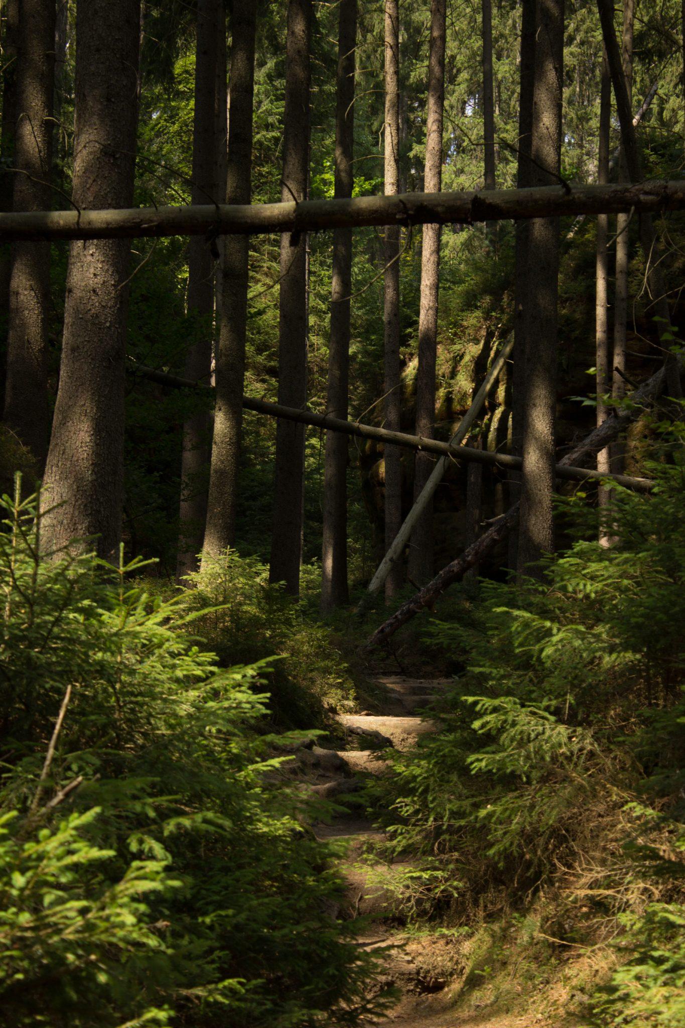 Kirnitzschklamm Hermanseck und Königsplatz im Kirnitzschtal wandern, Wanderweg im Wanderparadies Sächsische Schweiz mit vielen tollen Aussichten, riesiger Felsennationalpark, schöner schmaler Pfad im schattenspendenden Wald