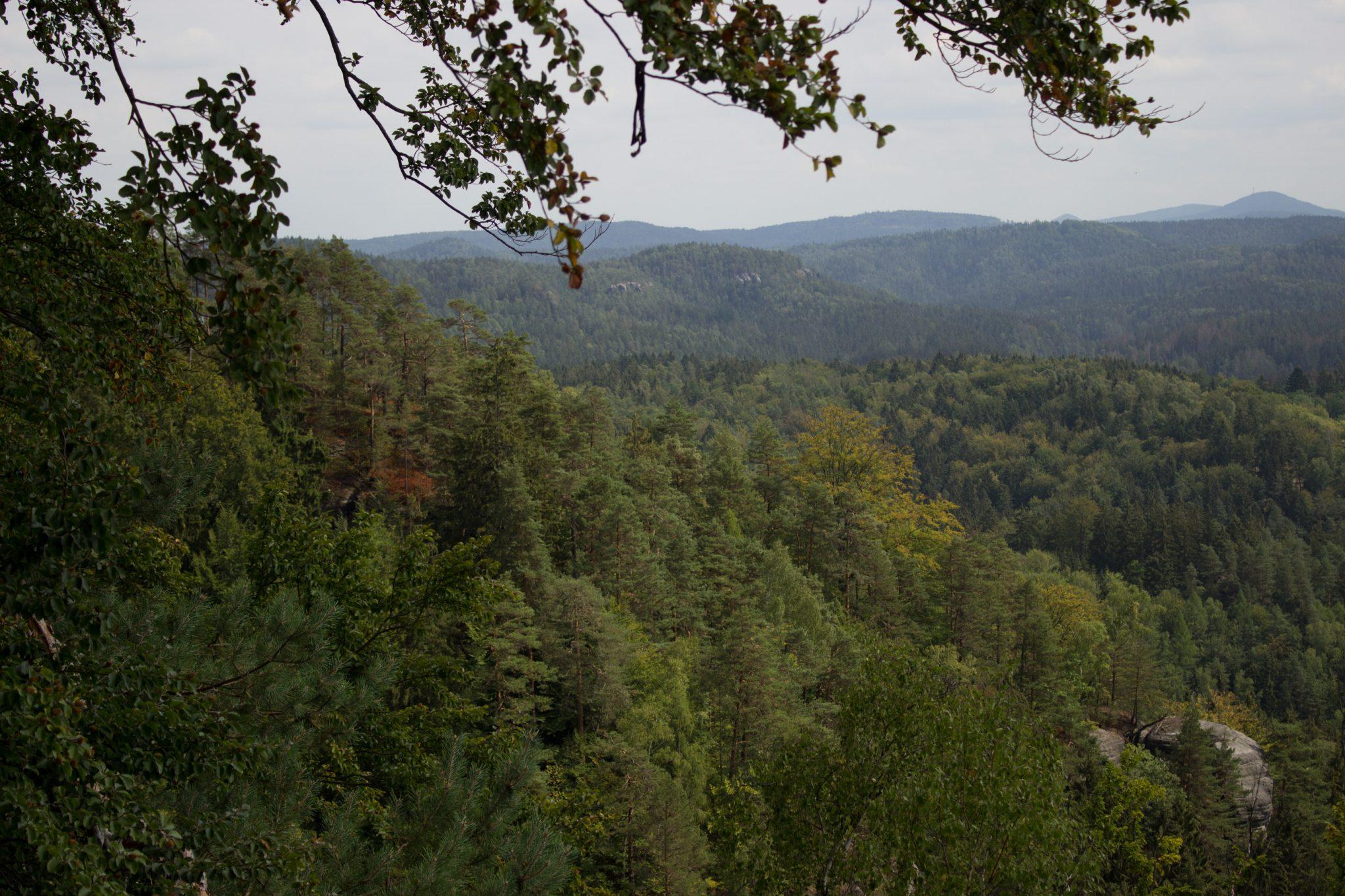 Kirnitzschklamm Hermanseck und Königsplatz im Kirnitzschtal wandern, Wanderweg im Wanderparadies Sächsische Schweiz mit vielen tollen Aussichten, riesiger Felsennationalpark, wunderschöne Aussicht vom Königsplatz auf einen Großteil des Nationalparks
