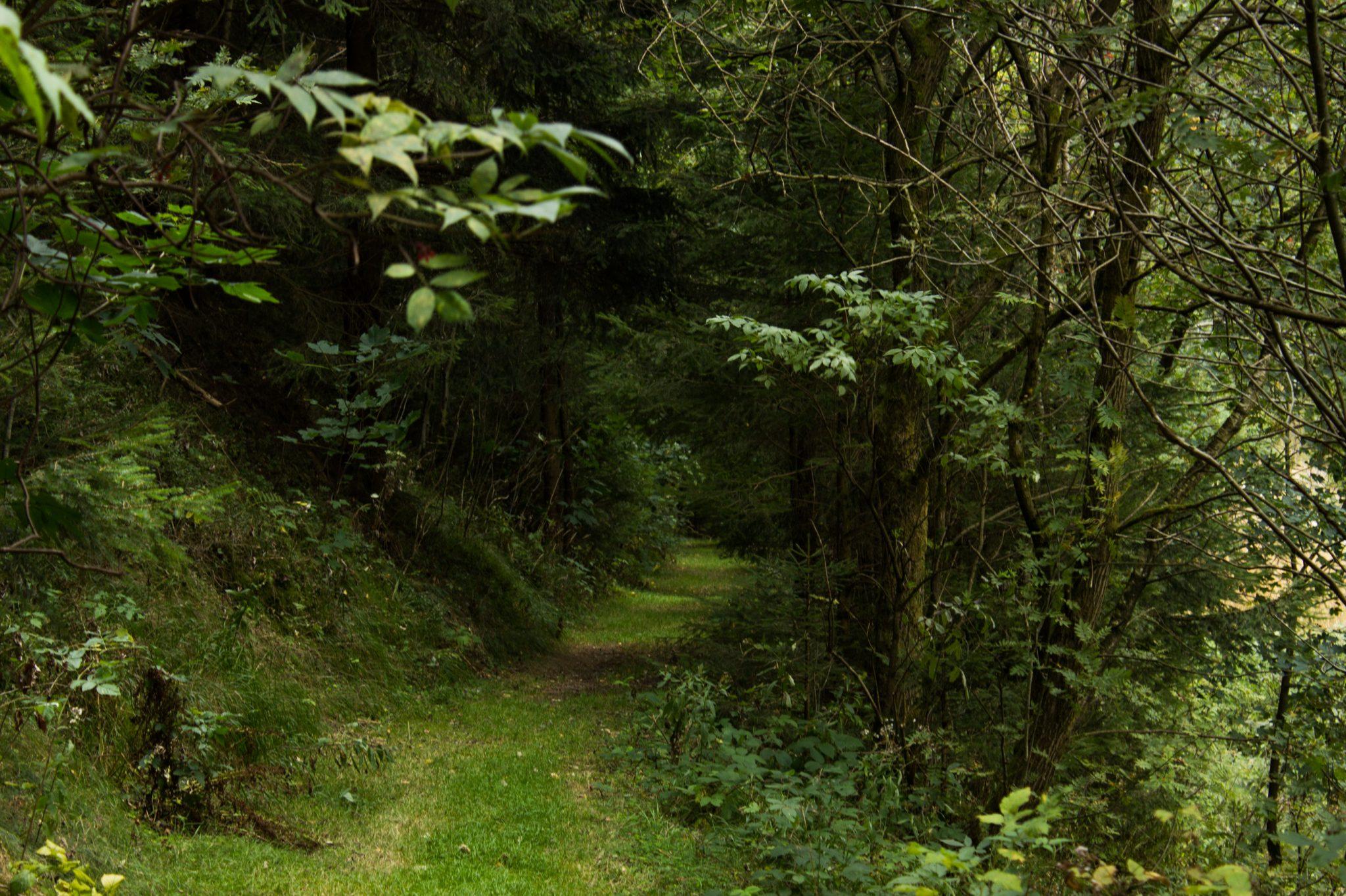 Großer Beerberg Schneekopf und Teufelskanzel, Gipfeltour Wanderung im Thüringer Wald, schöner Wanderweg durch Wald über Wiese