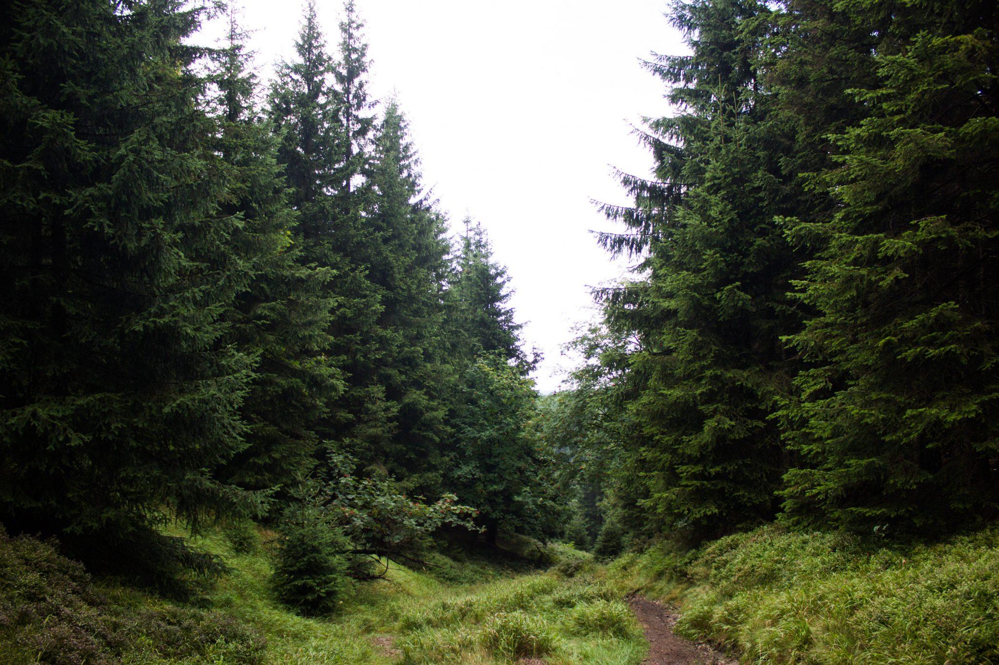 Großer Beerberg Schneekopf und Teufelskanzel, Gipfeltour Wanderung im Thüringer Wald, schöner Wanderweg auf schmalem Pfad durch Wald